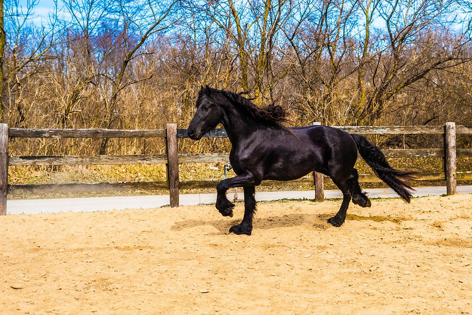 horse riding, horse training, nadia heffner, blue heeler, horse boarding, horse training, riding lessons, horses for sale