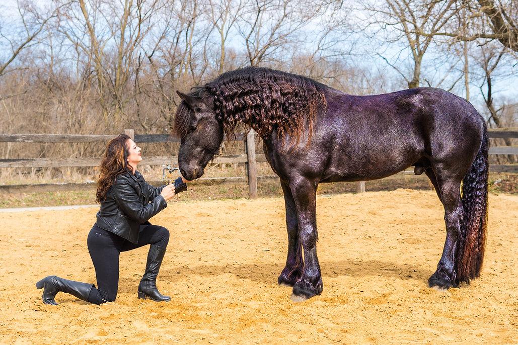 horse riding, horse training, nadia heffner, blue heeler, horse boarding, horse training, riding lessons, fresian stallion, liberty training