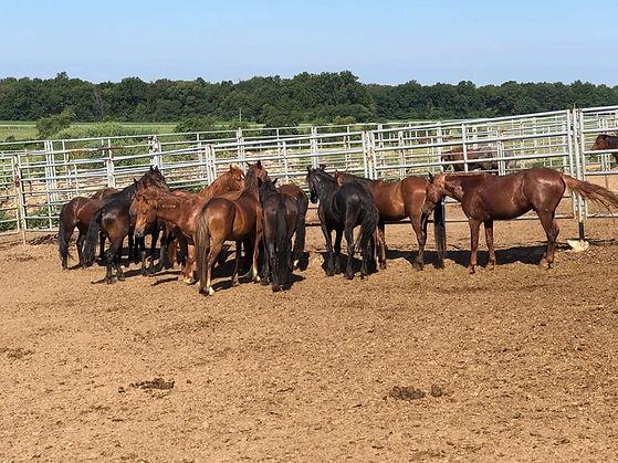 horse riding, horse training, nadia heffner, blue heeler, horse boarding, horse training, riding lessons