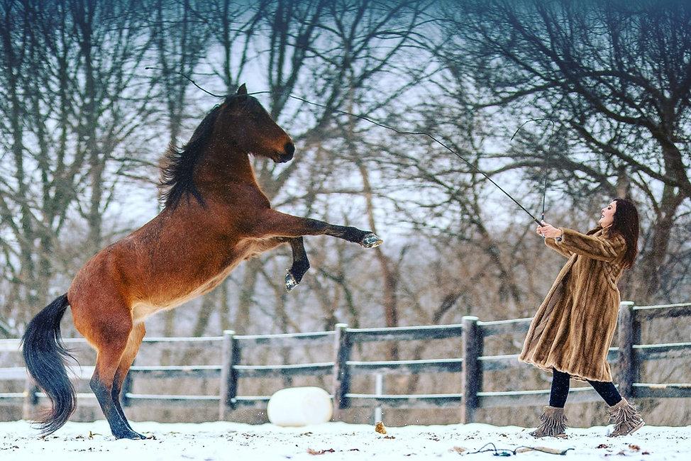 horse riding, horse training, nadia heffner, blue heeler, horse boarding, horse training, riding lessons,