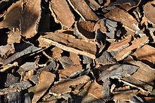 cork-oak-505263_1920.jpg