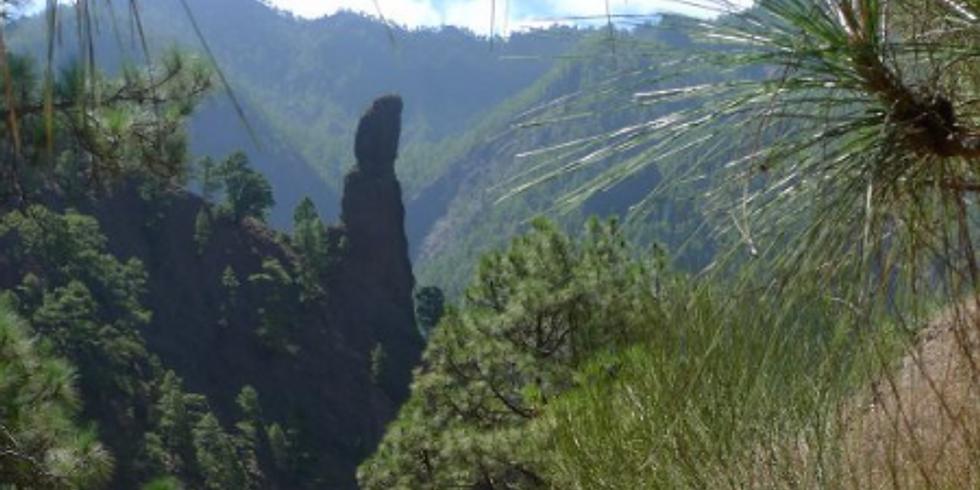 Vacaciones Yoga La Palma 2019