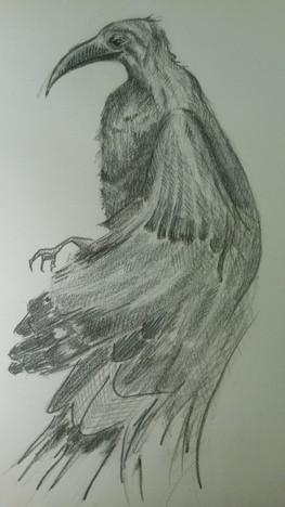 Dessin au crayon  Drawing with graphite pencils