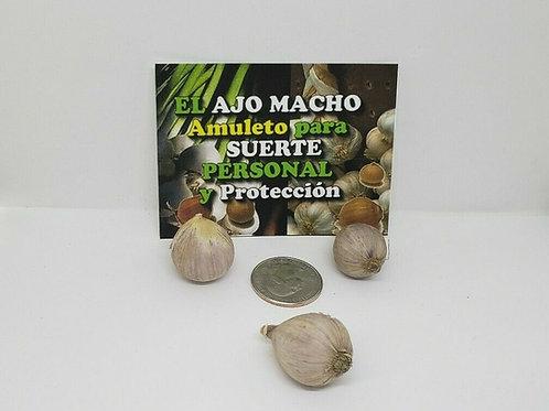 AJO MACHO 3 PCS DINERO-SUERTE Y PROTECCION INSTRUCCIONES INCLUIDOS !