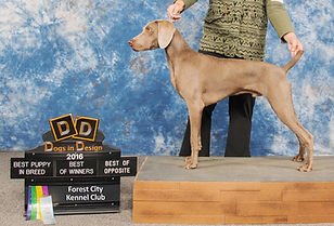 Leif show pic 9 months