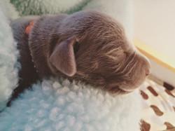 Orange boy, 5 days old