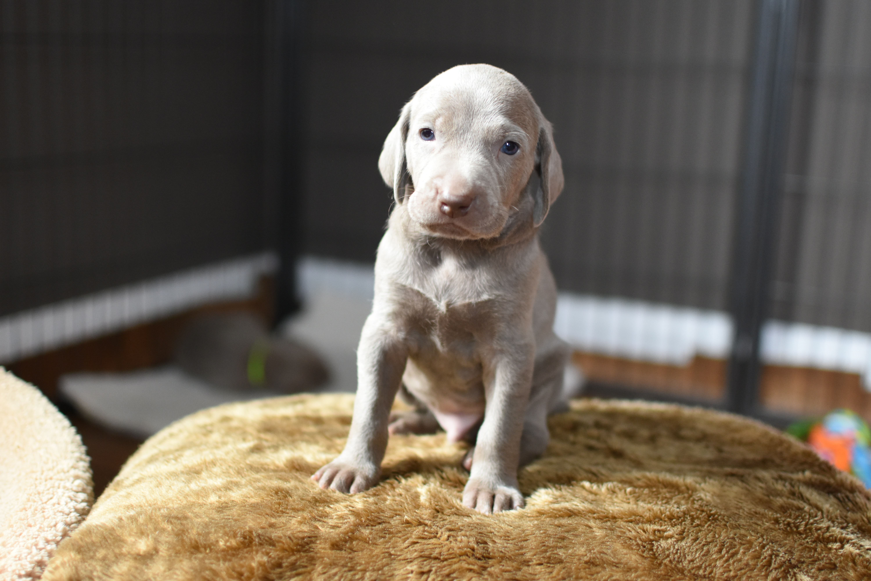White Boy, 4 weeks old