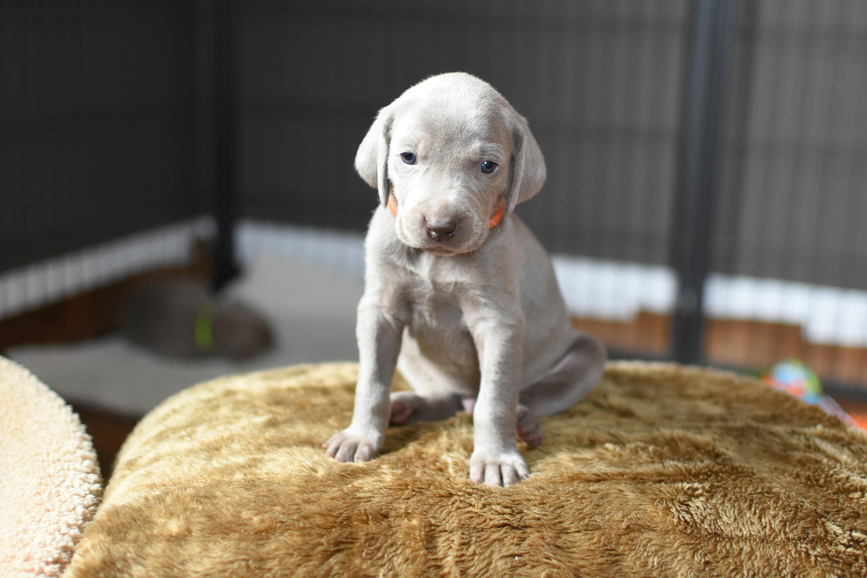 Orange Boy, 4 weeks old