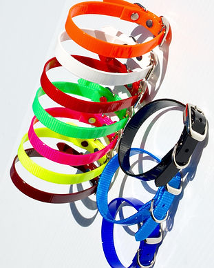 puppy collars (1)_edited.jpg