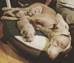 Belle & pups - 20 days