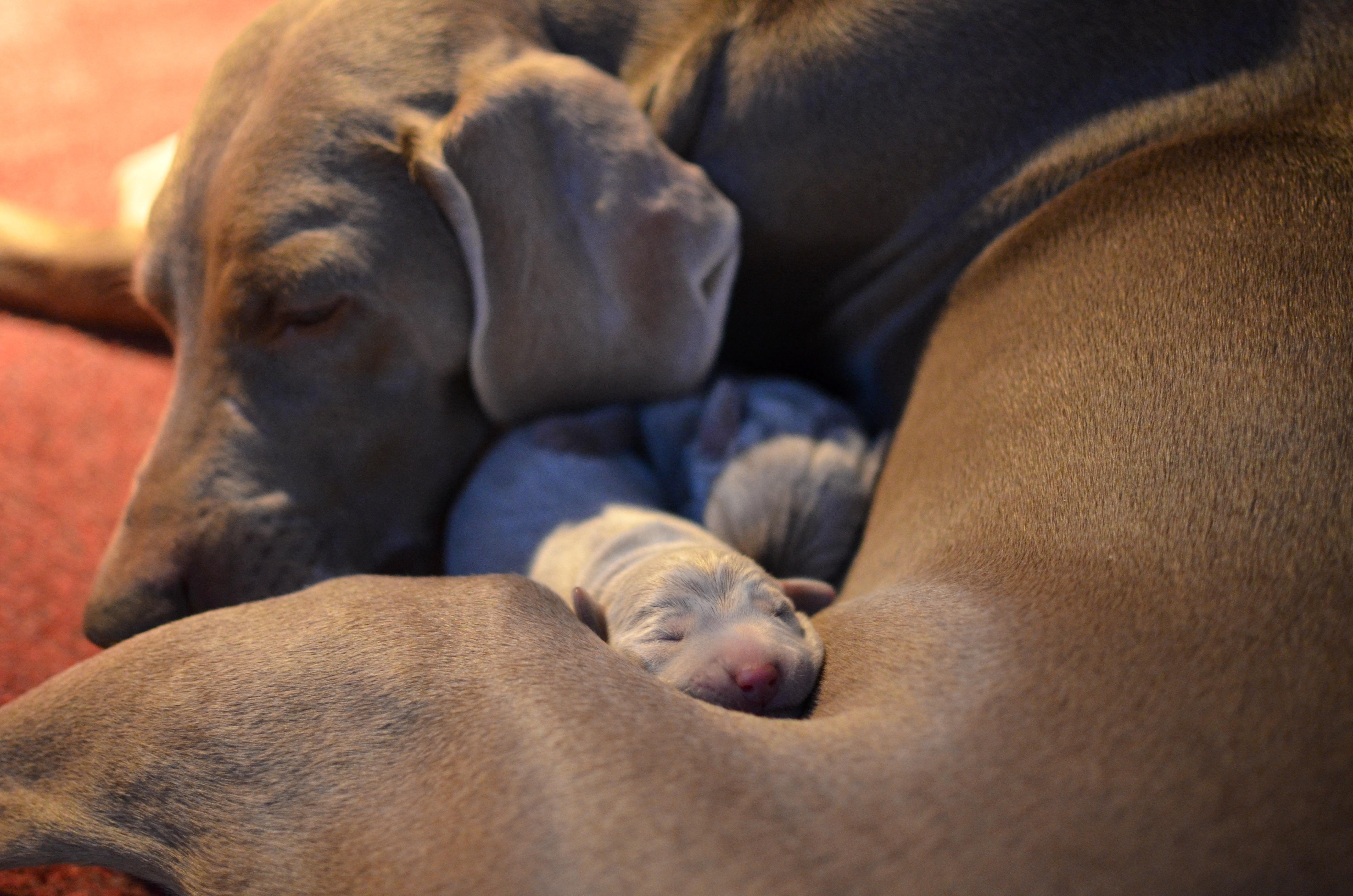 Shade & Pup