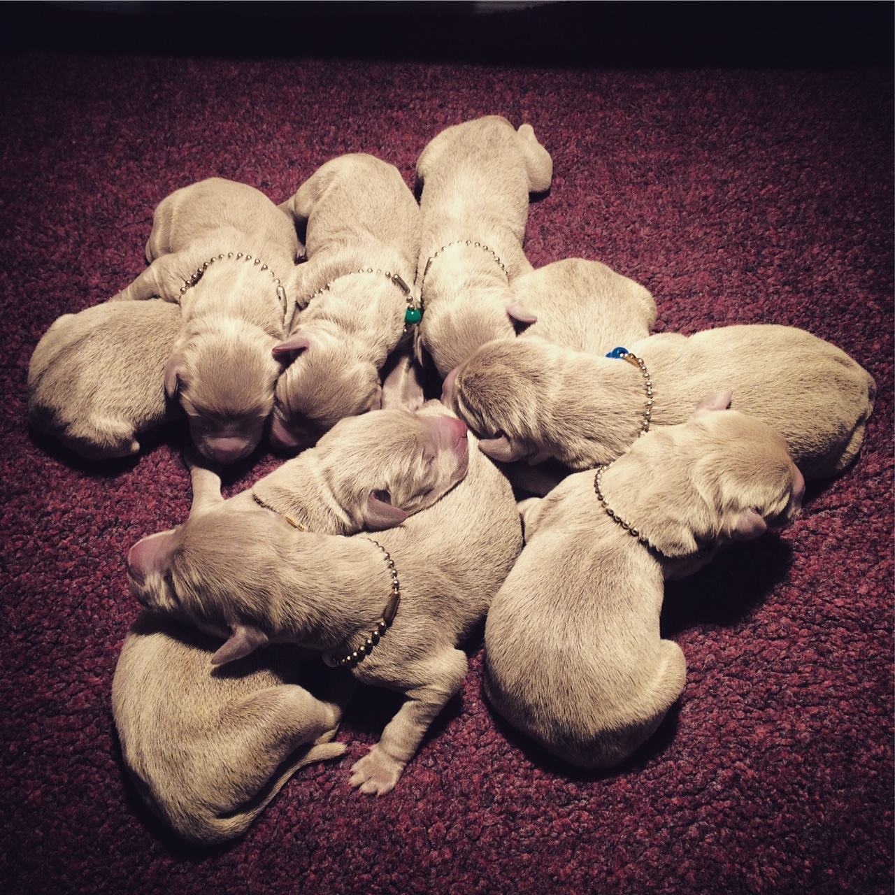 All Nine - 1 day old