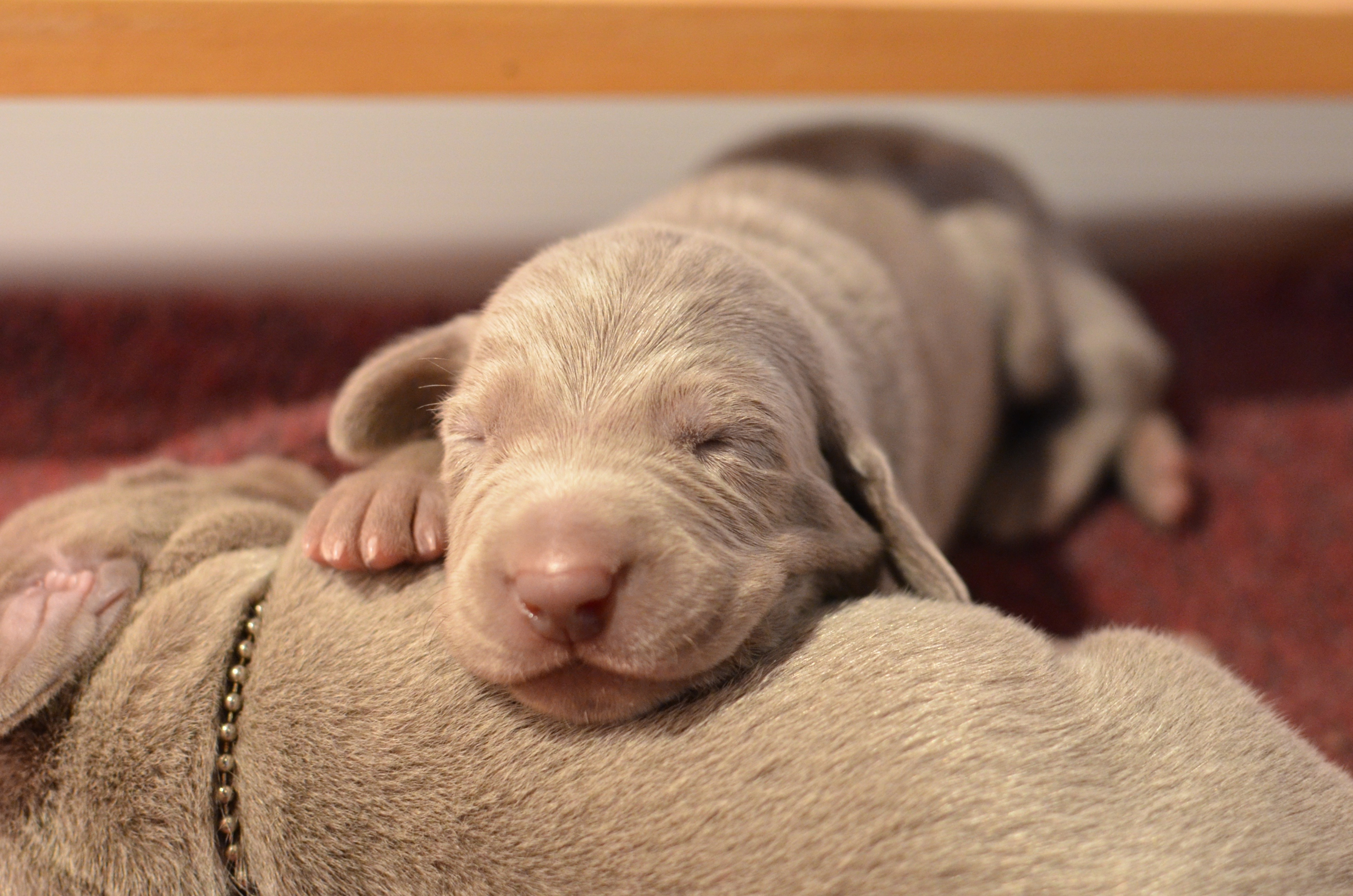 Blue boy - 10 days old