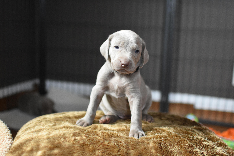 Black Boy, 4 weeks old
