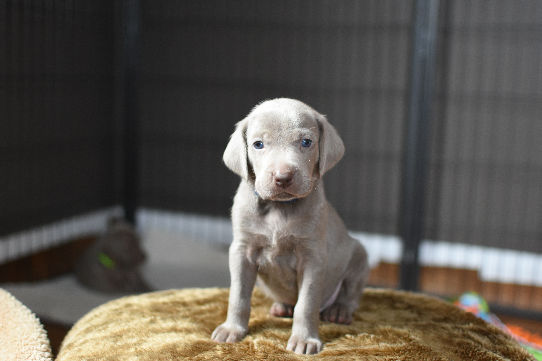 Blue Boy, 4 weeks old