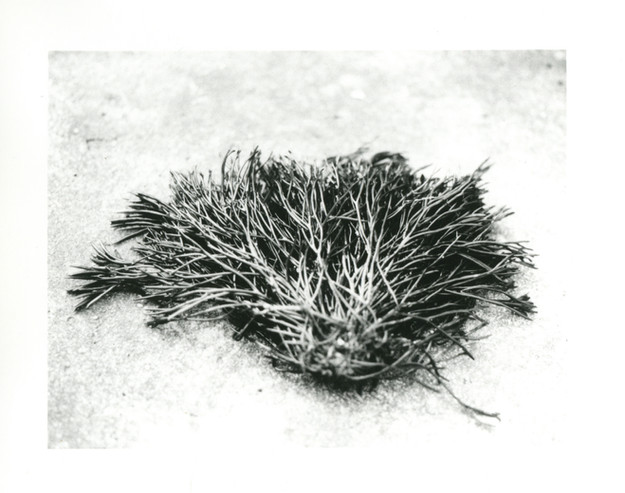 The Sea's Weeds 7