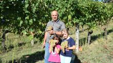 LIVE ITALY and THE GRAPE HARVEST