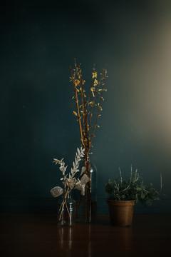 Still Life_Magical_Hollie Jeakins Photography.jpg