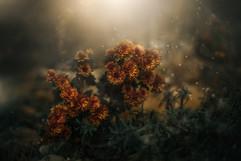 Still Life_Hamilton_Yellow_Wildflowers.j