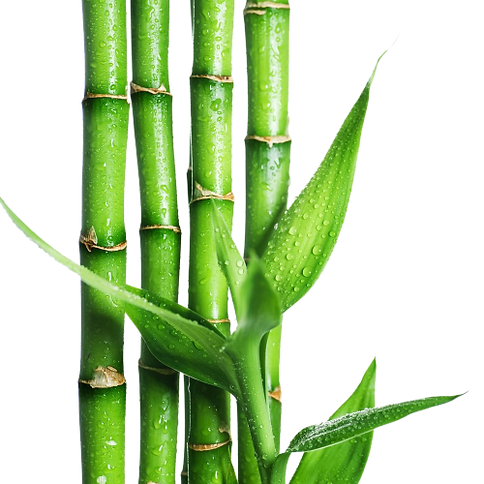 Bamboo-removebg-preview (1).png