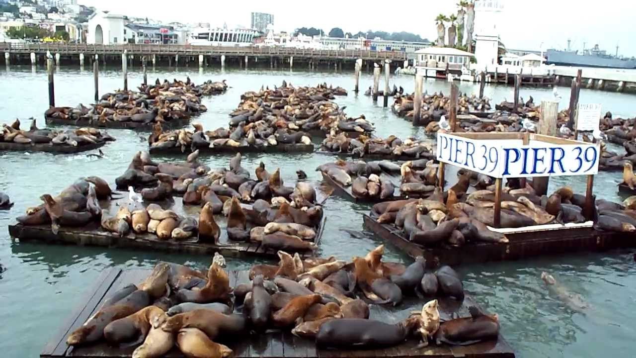 Sea Lion 29th Anniversary