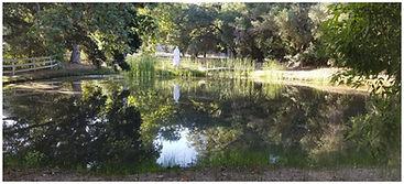 beautiful pond.jpg
