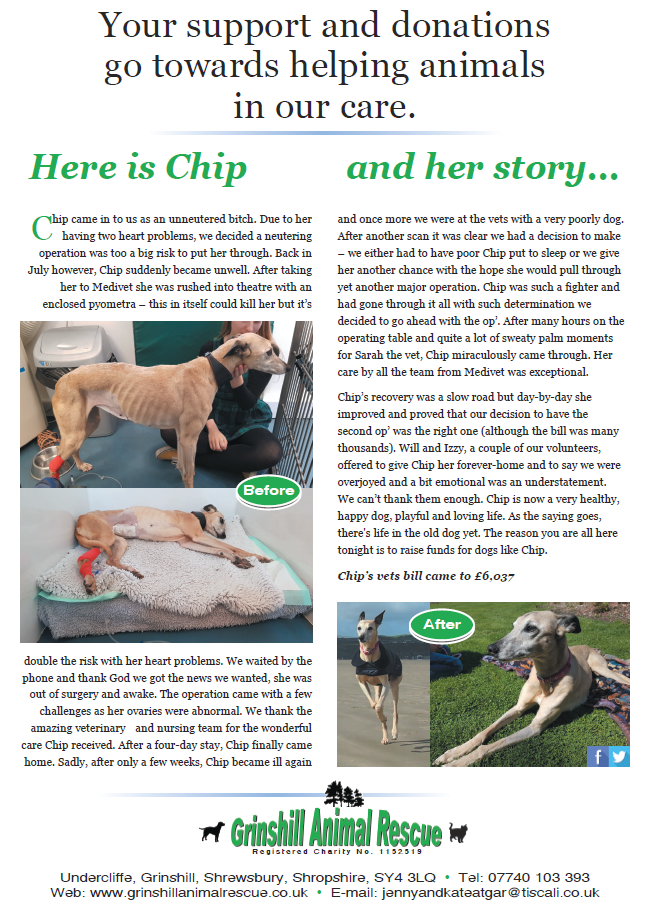 chip and her story.png