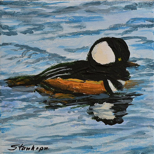 Happy Hooded Merganser by Ann Stanhope