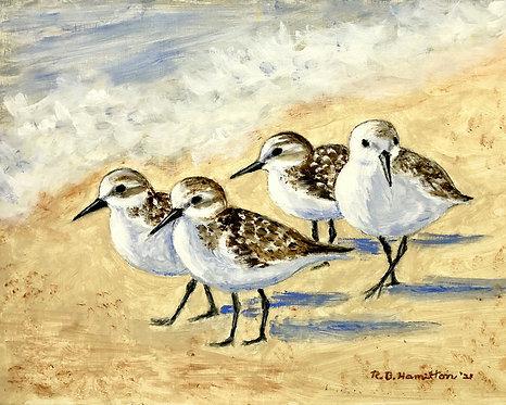 Gathering Sanderlings by Dick Hamilton