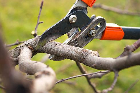 Baumschnitt.jpeg