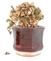 Wilted pot plant