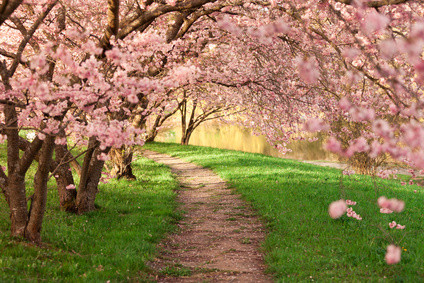 Spring blossom