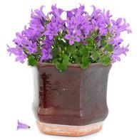 Healthy pot plant