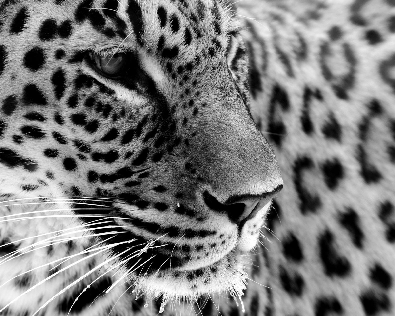 6861358-jaguar-pictures