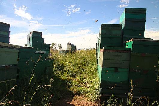BeekeepingonPublicLand_westernCO_GloriaD