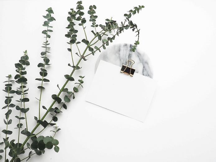 Eucalyptus plant_edited.png