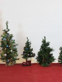 small trees .jpg