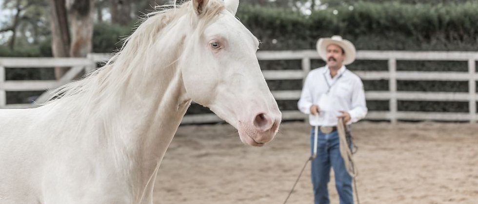 Equusmanship Nivel 1 VIP