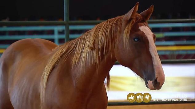 Um pouquinho do que rolou no Global Equus International 2016