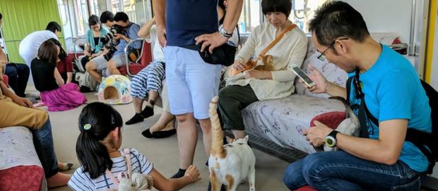 Wellbeing Bucket List - Riding a Cat Train in Japan...