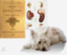 hipoadrenocorticismo canino