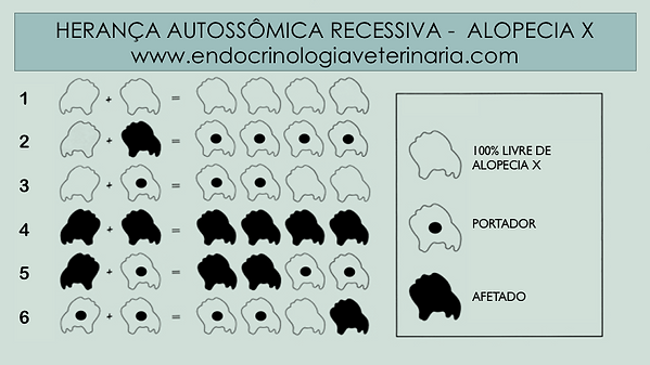 Alopecia X - Hereditariedade