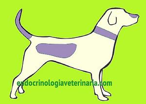 Alopecia no Hipotireoidismo Canino