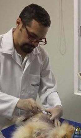 Médico Veterinário Alexandre Bastos Baptista