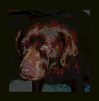 Hipotireoidismo em Cão