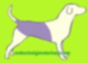 alopecia hiperadrenocorticismo em cães