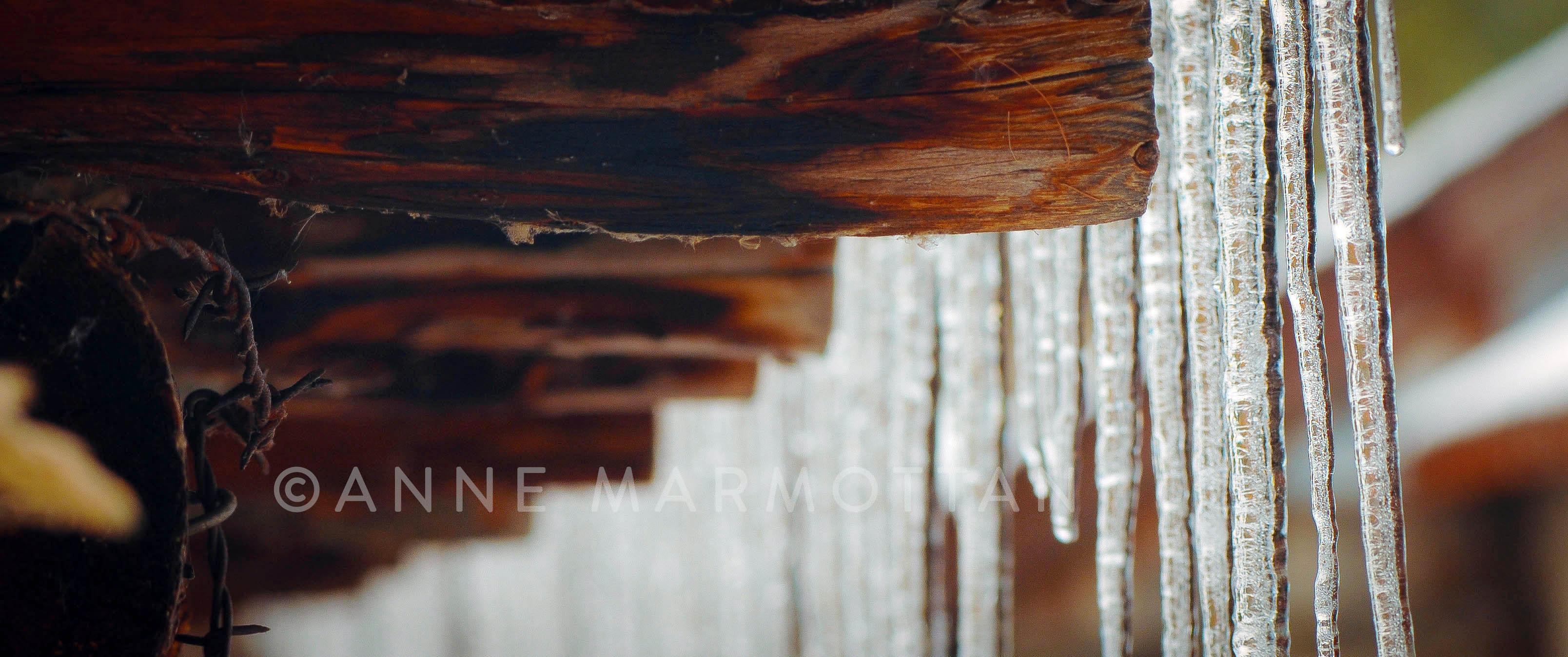 monal_détail_©Anne_Marmottan