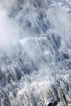 forêt_©Anne_Marmottan