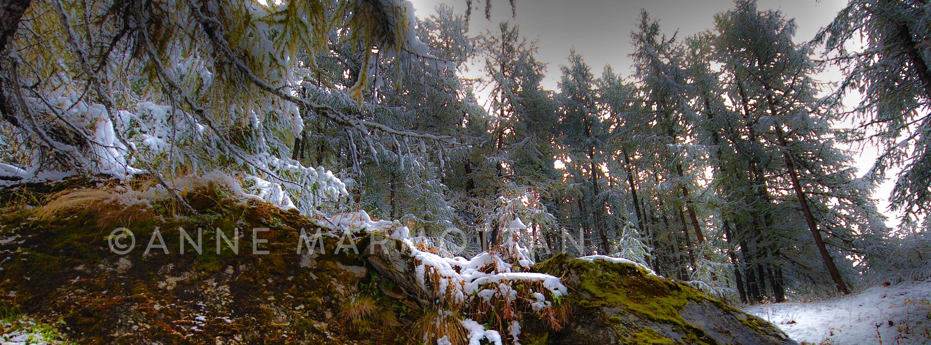 monal_forêt_©Anne_Marmottan