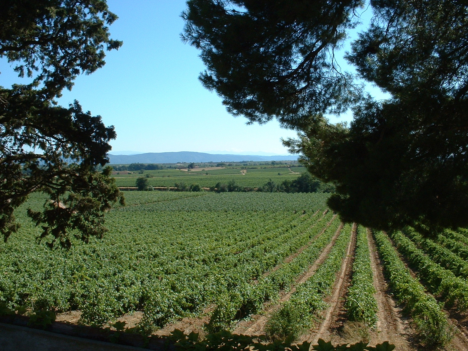 6 vineyards